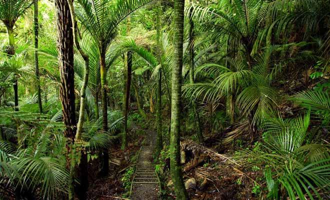 La traversée de la forêt constitue la dernière étape. Ce devrait être la plus agréable, car la fraicheur apaise après une journée de marche exposée au soleil. Mais la fatigue accumulée dans les mollets empêche généralement d'en profiter à 100%.