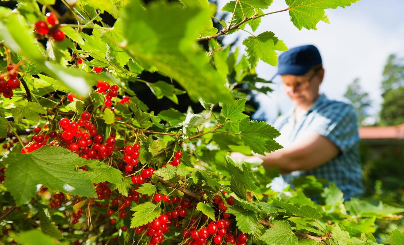 Pour passer d'une exploitation agricole à l'autre, les travailleurs saisonniers empruntent souvent le bus. Des cartes de fidélité permettent de cumuler des points pour décrocher des réductions.