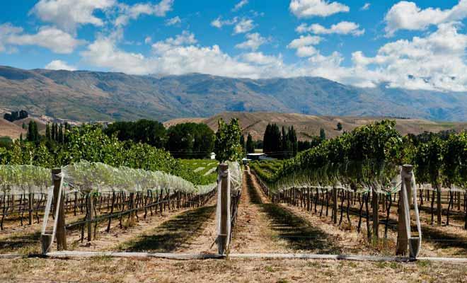 L'Otago comme le Marlborough sont des régions vinicoles. Durant les mois d'automne, la vigne prend une teinte orange spectaculaire.