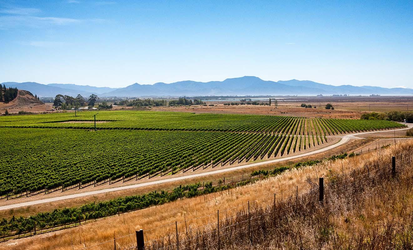 Contrairement à ce que l'on pourrait croire, la Nouvelle-Zélande produit du vin de qualité, et vous pourrez même en ramener à la fin du séjour.