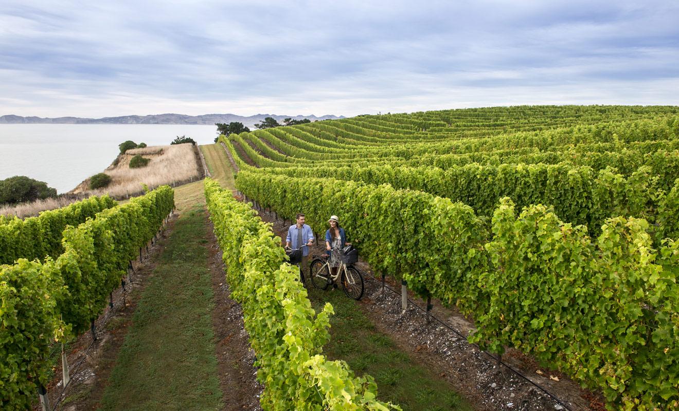 Si l'on trouve des vignobles sur les deux îles du pays, la qualité des vins produits varie surtout en fonction du climat. L'Île de Jade semble avantagée et donne les meilleurs sauvignons blancs et pinots noirs.