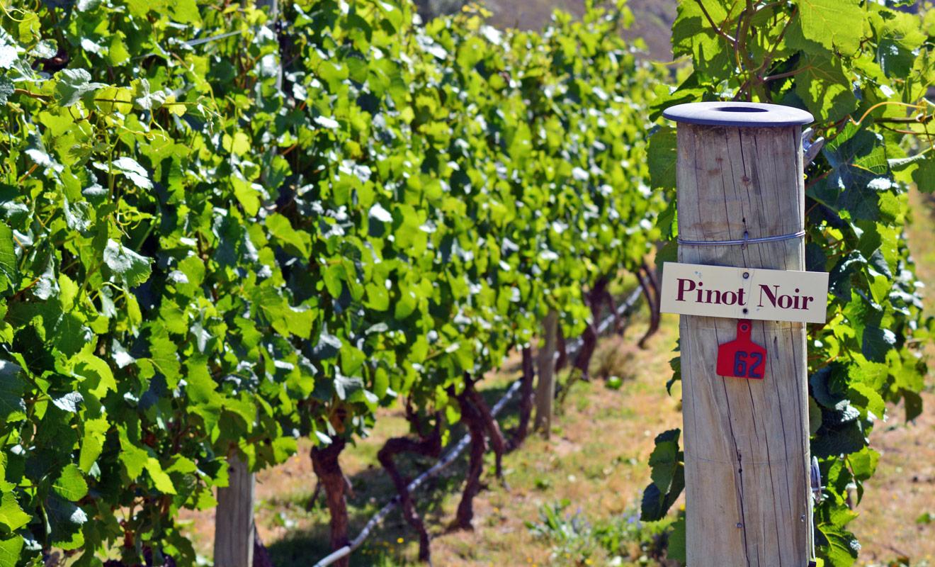 La région de l'Otago donne d'excellents vins grâce à son climat sec et ensoleillé, mais surtout grâce à la richesse de sa terre.