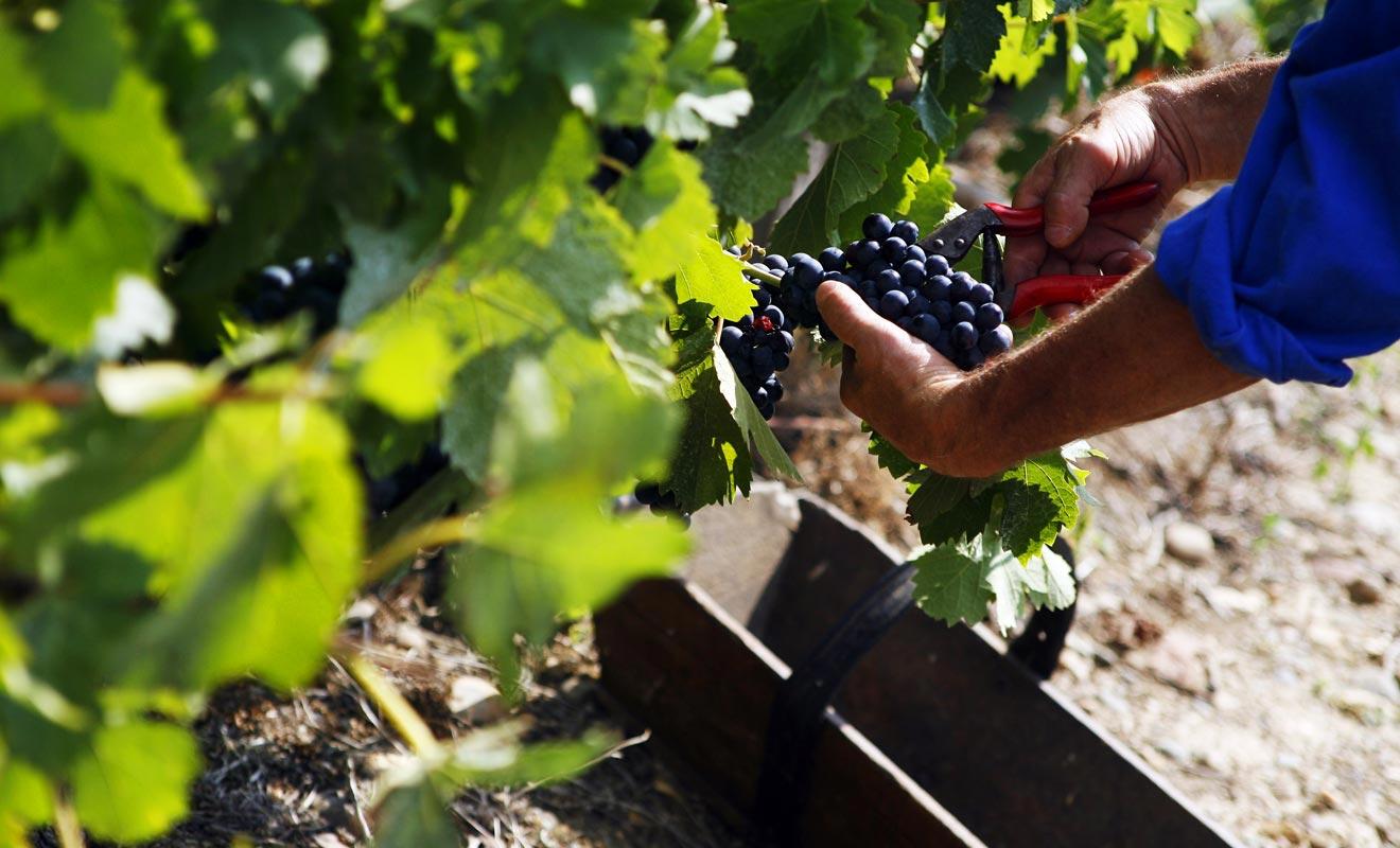 Contrairement à la tradition séculaire qui veut que le vigneron garde jalousement ses secrets, les producteurs néo-zélandais ont mis leurs savoir-faire en commun. Le résultat a largement dépassé leurs attentes.