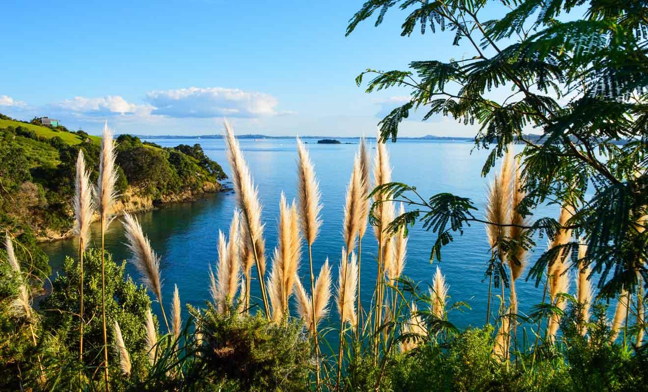 Cette île est de loin la plus belle surprise que l'on puisse trouver dans la région d'Auckland.
