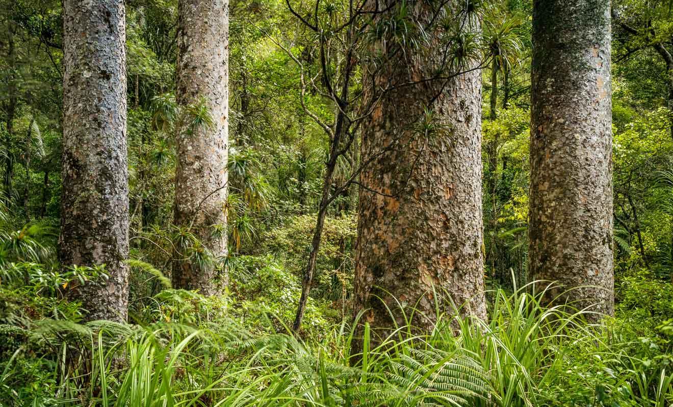 Normalement, les arbres ne poussent pas aussi près les uns des autres et il s'agit d'une exception à la règle.
