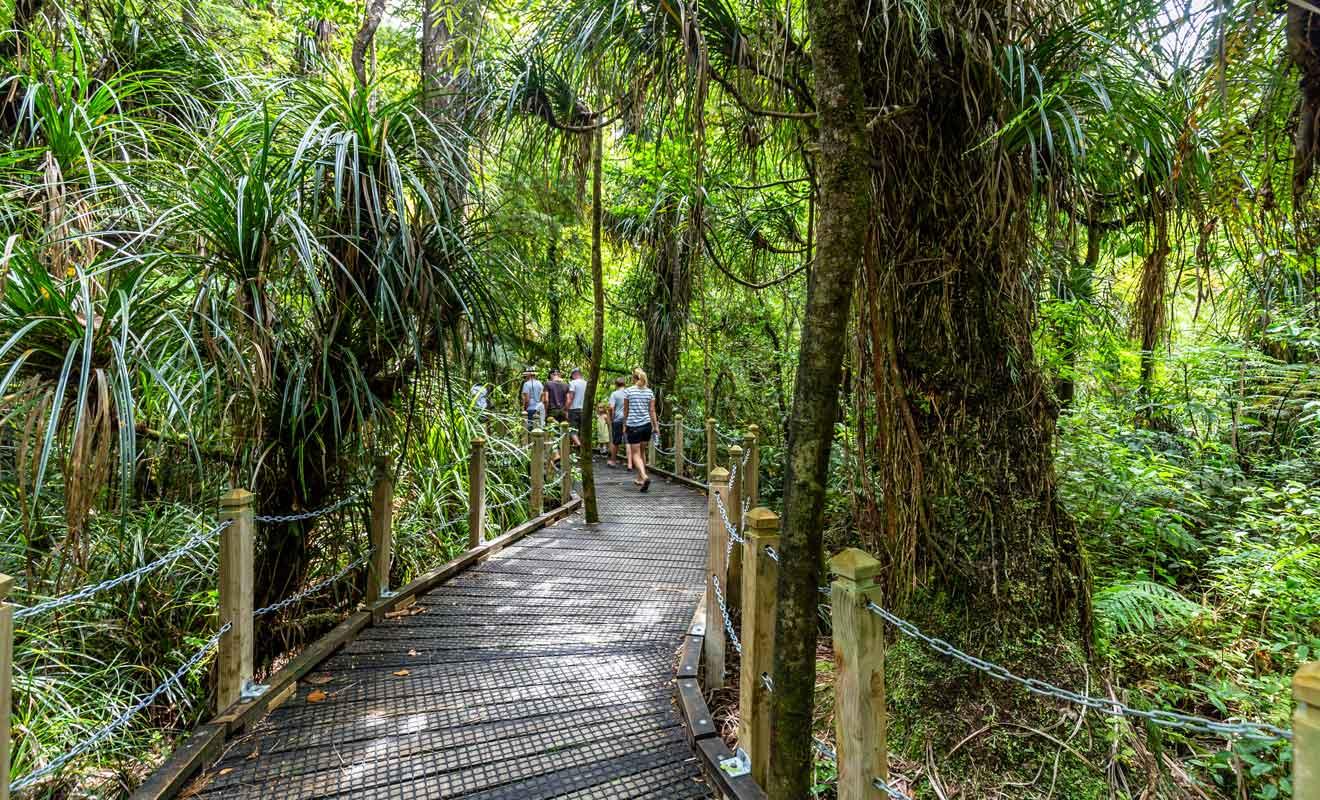 Il est strictement interdit de s'éloigner du sentier pour ne pas contaminer les arbres.
