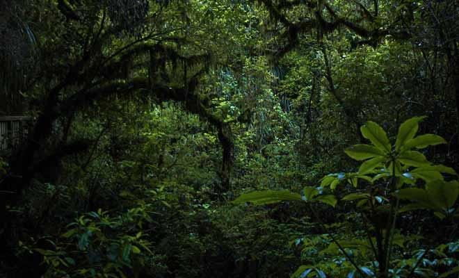 Il existe de nombreuses grottes cachées dans la forêt. Une bonne raison d'éviter le hors-piste et suivre le sentier.