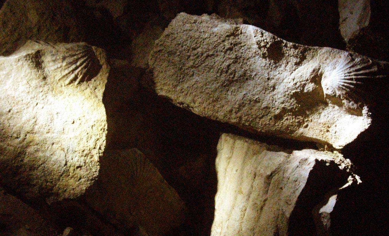 Toute la région de Waitomo était autrefois située sous la mer. En atteste la présence de nombreux fossiles de coquillages.