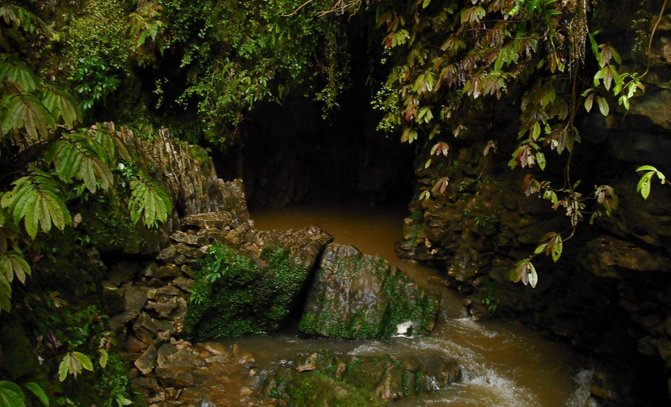 La rivière de Ruakuri disparait sous terre où elle traverse des grottes avant de revenir à la surface.