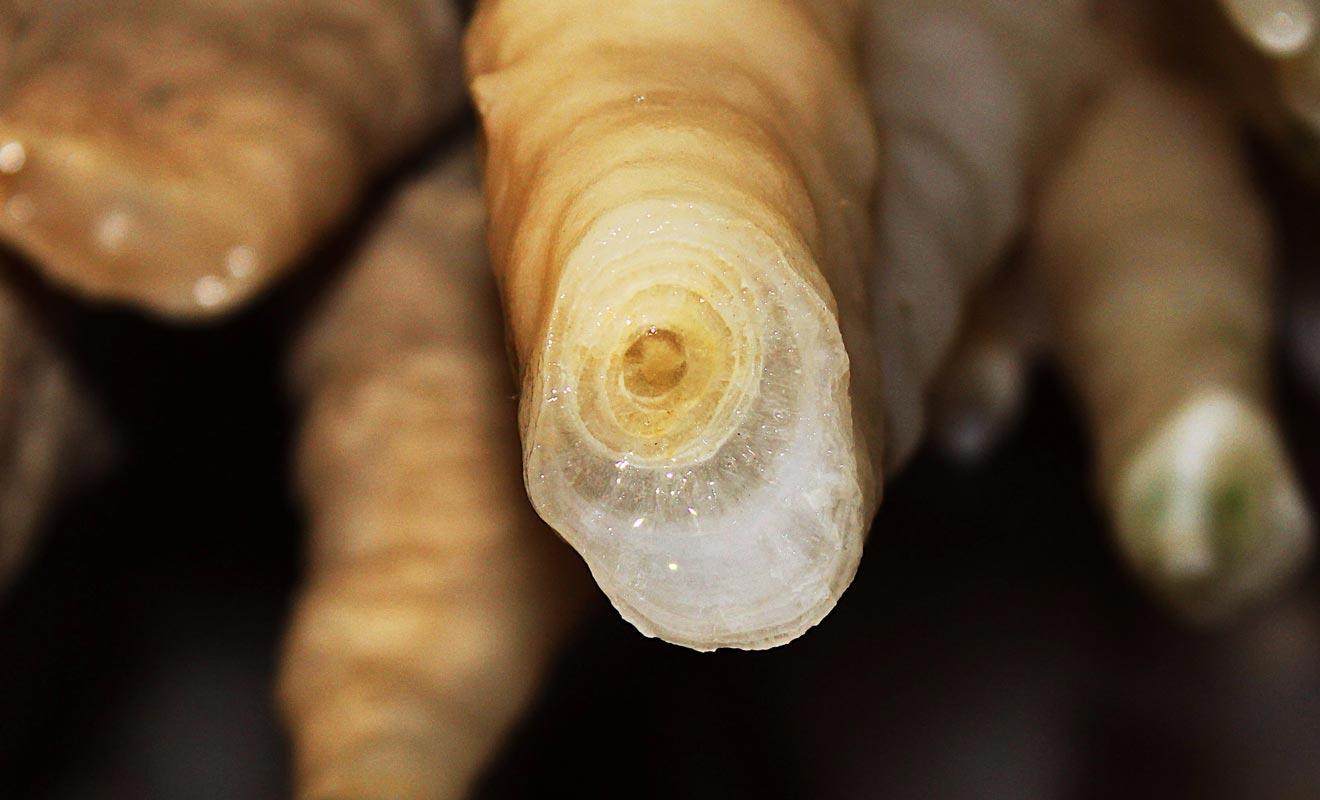 Il faut souvent plus d'un siècle pour former une stalactite.