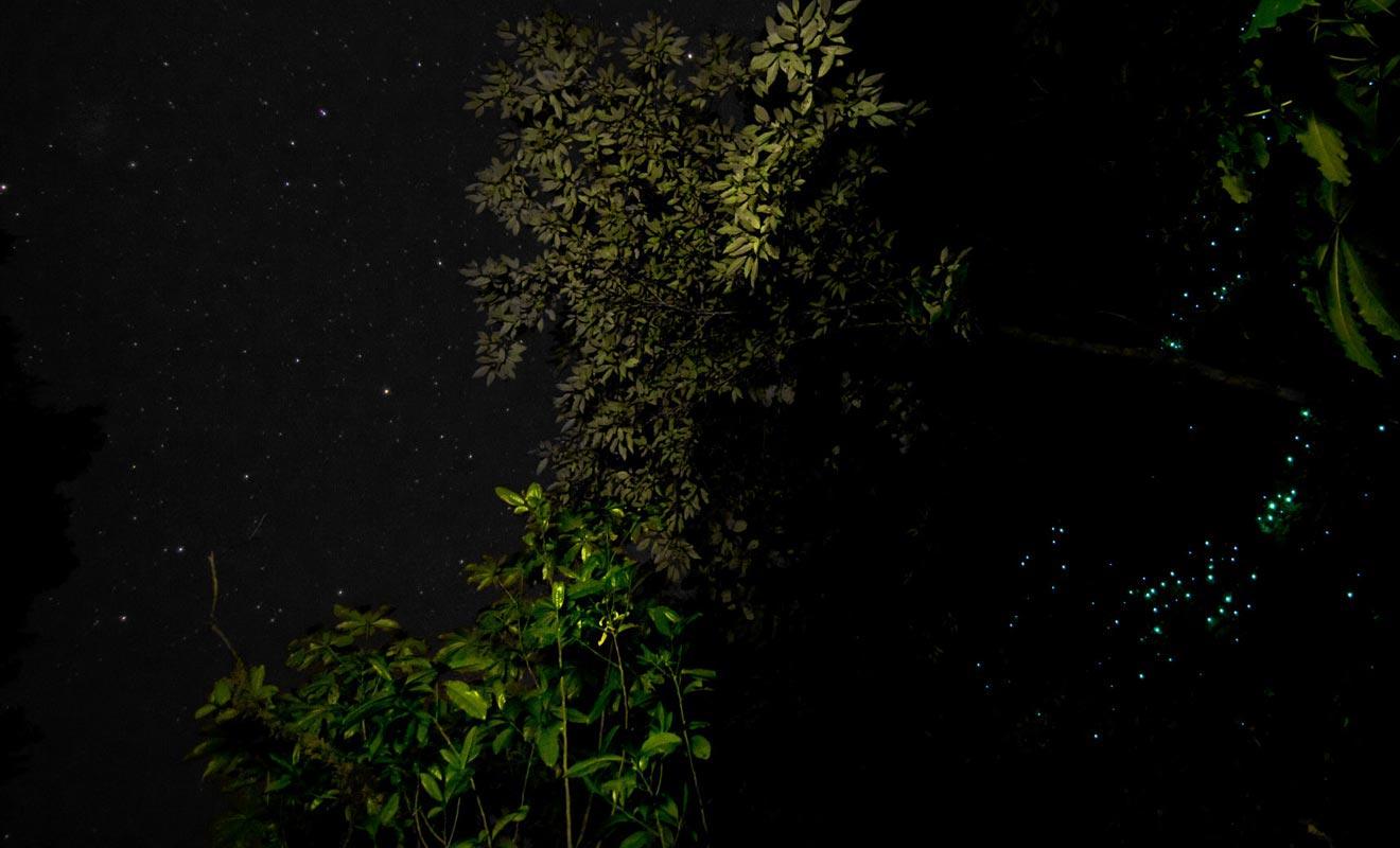 Si vous êtes claustrophobe, vous ne serez pas pour autant privé du plaisir d'admirer des vers luisants. Il suffit de se promener en forêt à la nuit tombée pour en découvrir.