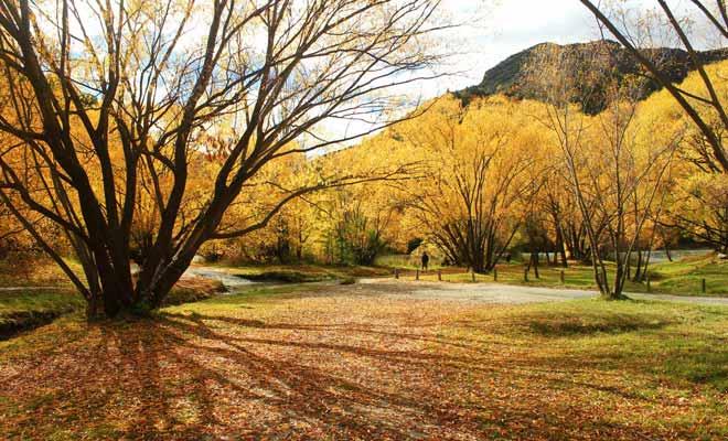 La région de l'Otago se visite idéalement durant le début de l'automne. Les feuilles mortes jonchent le sol et les arbres prennent une teinte orangée spectaculaire.
