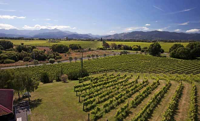 Les vignobles néo-zélandais tirent parti de la richesse du sol volcanique. Certaines vignes donnent un excellent sauvignon blanc.