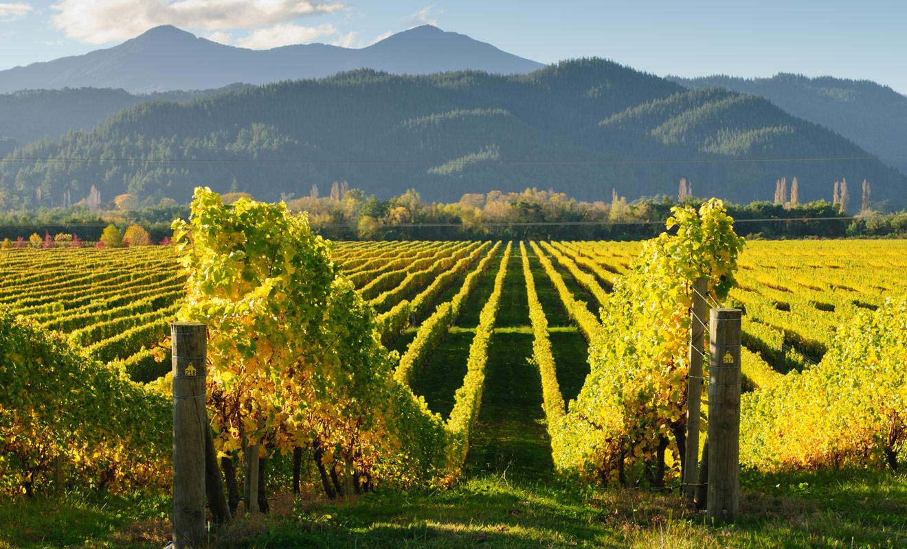 Parmi tous les vins produits dans l'Otago, ce sont surtout les vins rouges qui remportent un grand succès, notamment le célèbre pinot noir de Rippon Vineyard.
