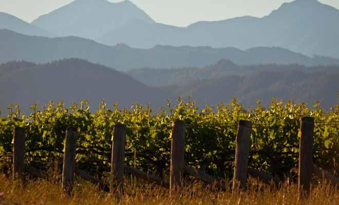 La richesse du sol volcanique explique en partie le succès des vins produits dans la région de l'Otago. L'autre raison du succès est liée au réseau d'entraide des exploitants qui mettent leurs astuces en commun.