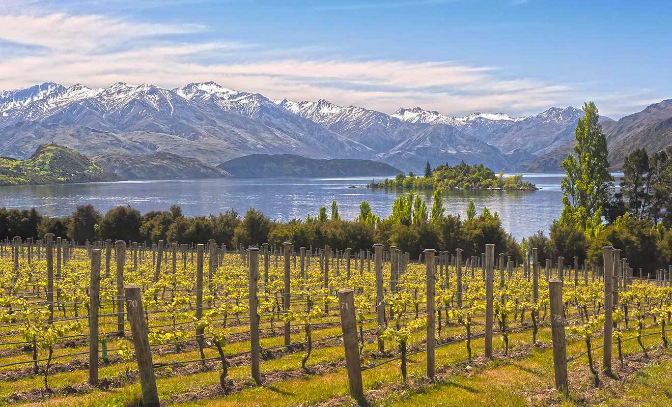 Le vignoble de Rippon Vineyard que vous pouvez voir sur la photo est d'ailleurs souvent loué pour des mariages.