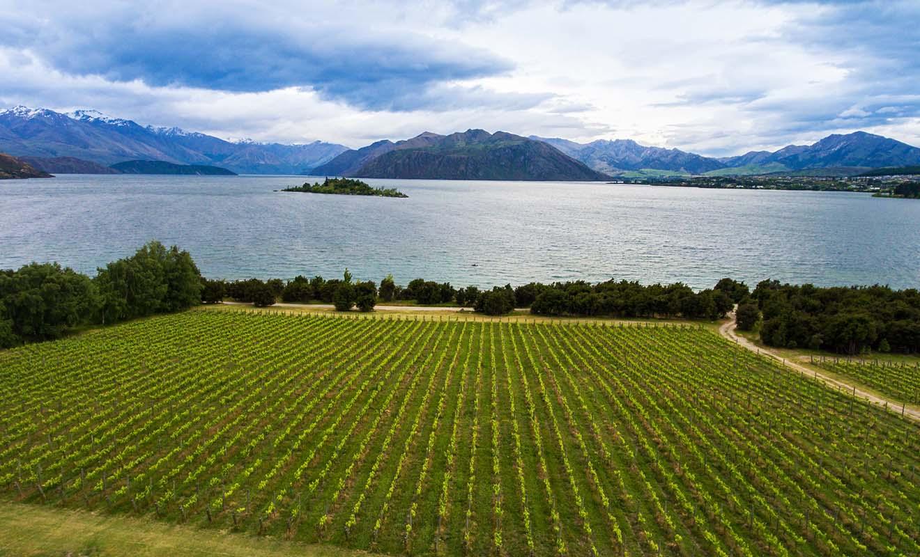 Le vignoble de Rippon offre un panorama tellement spectaculaire sur le lac Wanaka que de nombreux mariages se tiennent chaque année dans la propriété.