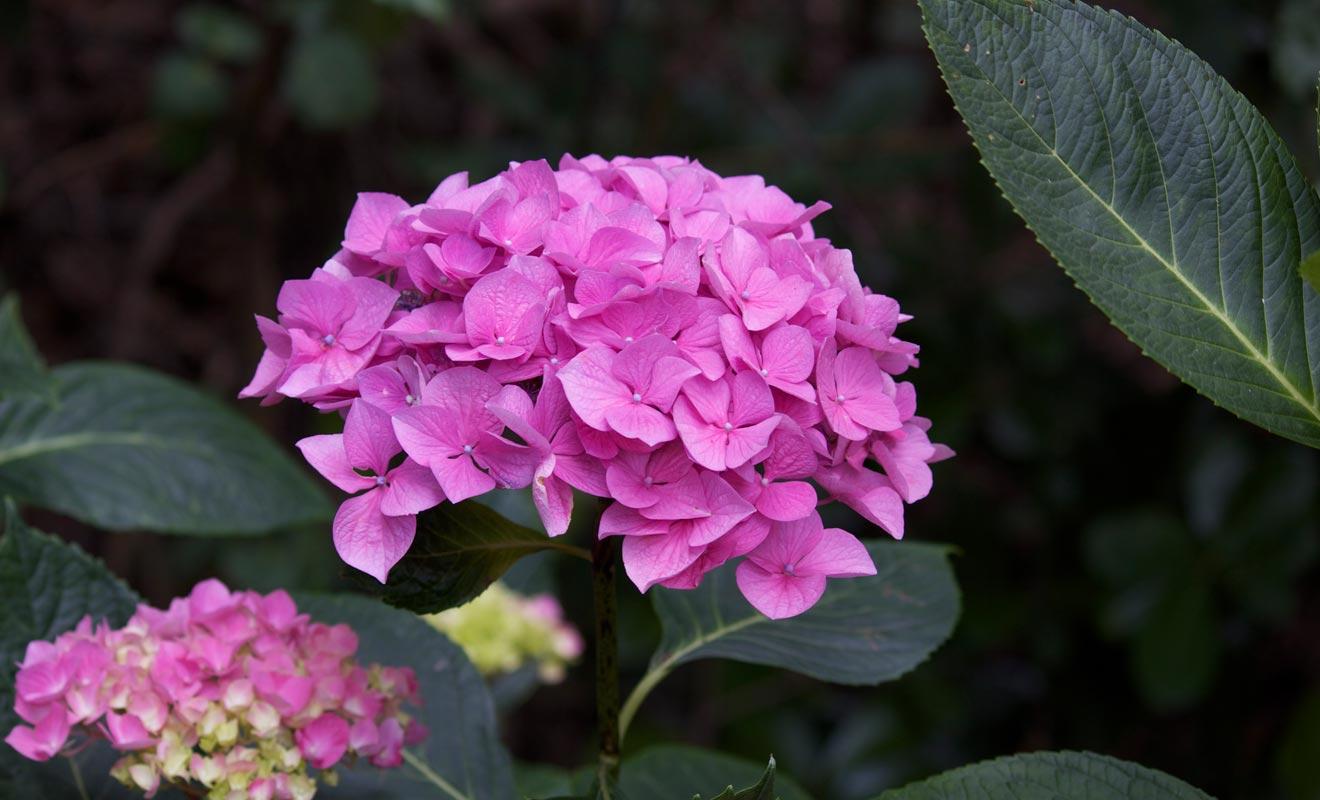La roseraie Lady Norwood du Jardin botanique de Wellington possède plusieurs variétés de roses.