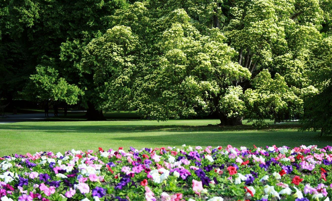 Le Festival de jazz ainsi que de nombreux spectacles ont lieu au Jardin botanique de Wellington. Un grand espace vert baptisé « The Dell » accueille les spectateurs. C'est également un endroit parfait pour pique-niquer.