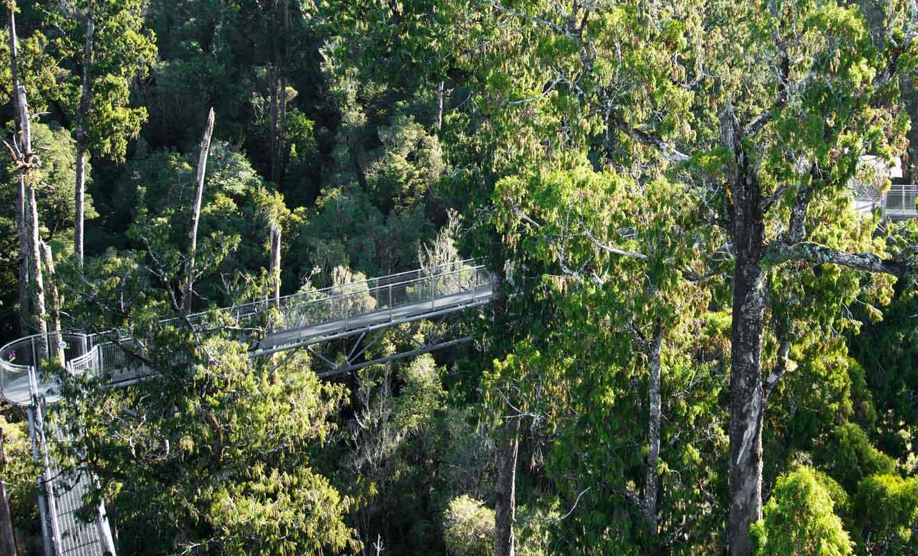 West Coast Tree Top propose de visiter la cime des arbres sur des passerelles.