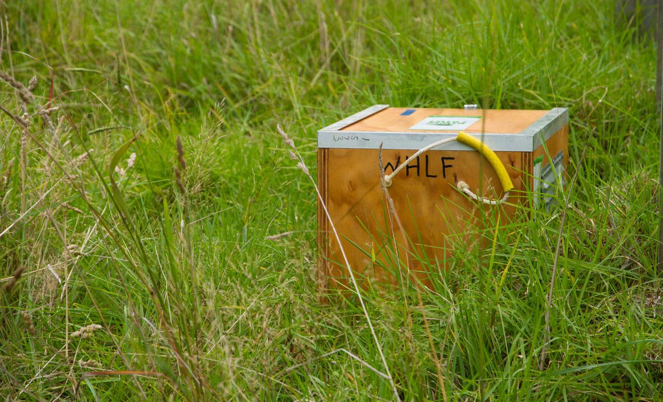 À l'intérieur de cette caisse se trouve un Kiwi qui va bientôt retrouver la vie sauvage après avoir vécu à l'abri des prédateurs jusqu'à l'âge adulte. Souhaitons-lui bonne chance !