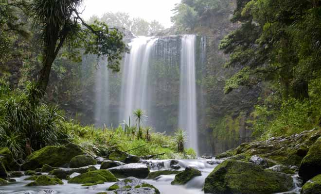 Impossible to visit Whangarei and its region without visiting the famous falls of the same name. In the heart of the forest, the Whangarei Falls are beautiful, whatever the weather.