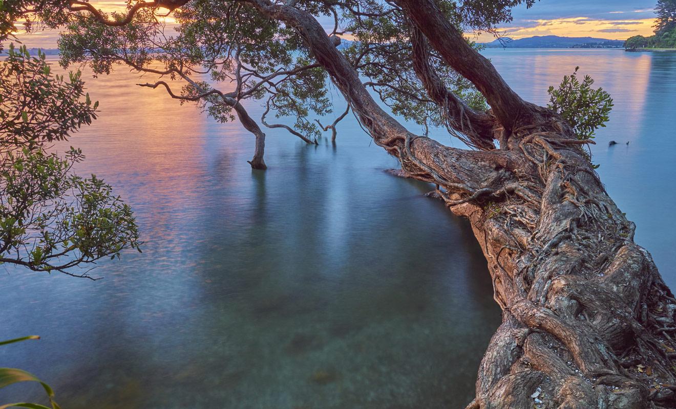 Whangarei est une étape incontournable de l'île du Nord de la Nouvelle-Zélande. Une étape que vous pourriez inscrire dans votre itinéraire si vous allez à Bay of Islands ou au Cap Reinga.
