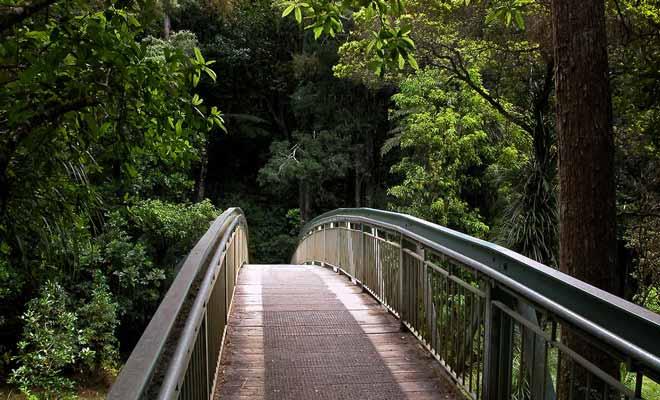 Pour se rendre aux Whangarei Falls, il suffit de suivre une courte promenade et un pont qui enjambe la rivière Hatea.
