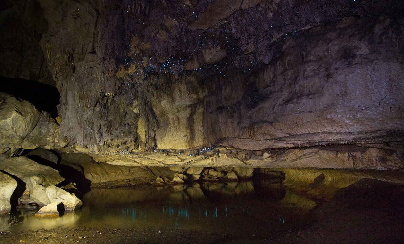 Les vers luisants qui brillent au plafond sont la véritable raison de votre visite de la grotte.