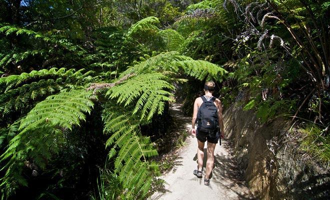 De Abel Tasman Coast Trail loopt af tussen bospaden en zandstranden van fijn zand. De hele route bedraagt 55 km op 3 tot 5 dagen wandelen!