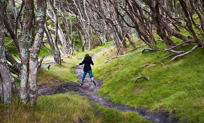 Niet alleen is de wandeling heel makkelijk (het verschil in hoogte overschrijdt nooit meer dan 150 meter), maar u hoeft niet de hele trekking te lopen. Water taxi's kunnen u afzetten en u terug krijgen waar u maar wilt.