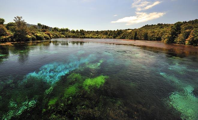 Pupu Springs tienen una pureza sin igual de agua. La visibilidad permanece perfecta hasta decenas de metros de profundidad.