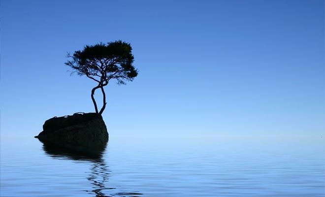 De eenzame boom van Tinline Bay groeit op een geïsoleerde rots offshore. Moeilijk om een meer fotogenisch onderwerp te vinden.