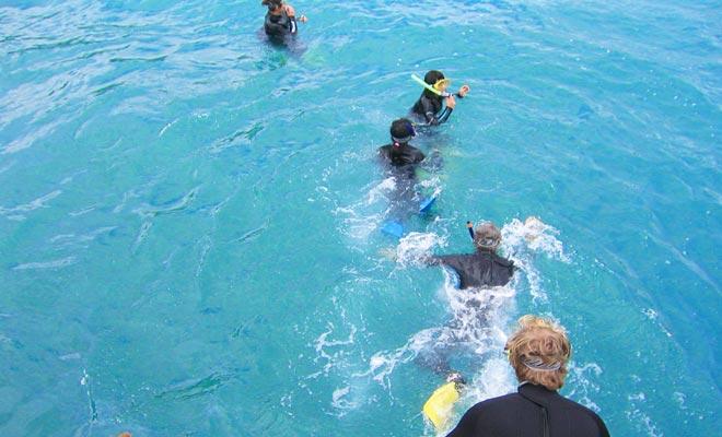 Niets is aangenaam dan het zwemmen met dolfijnen. Maar je moet een combinatie dragen, want het water is fris van het Zuidereiland.