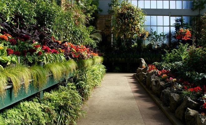 Het broeikas van de botanische tuin kan gratis bezocht worden. Dit is ook een ideale setting voor bruiloftfoto's.
