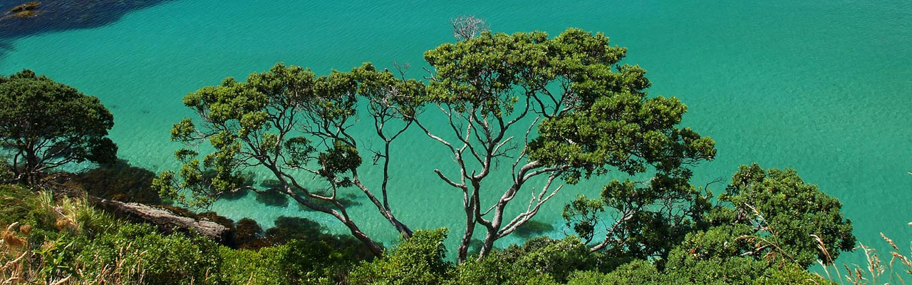 The coast of Bay of Islands and its turquoise sea.