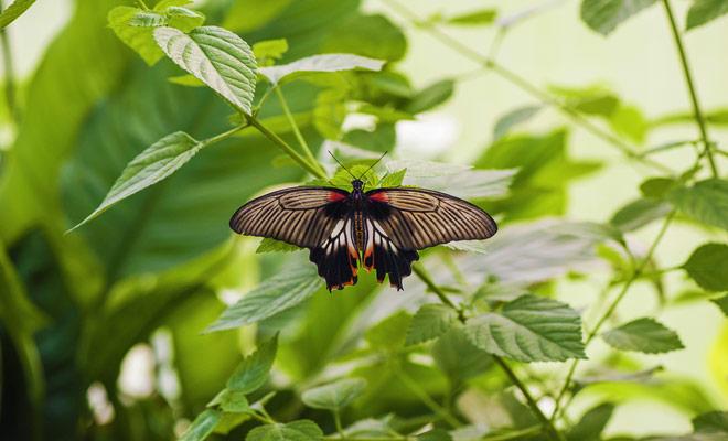 El Museo de Canterbury tiene un gran invernadero que alberga cientos de mariposas multicolores. El acceso a esta casa de la mariposa está sujeto a una tarifa especial en la entrada.