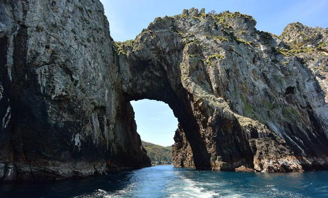 De Poor Knight Islands zijn een mariene reserve en het mag niet op de eilanden dokken. Aan de andere kant is duiken toegestaan en met deze Dive Tutukaka kunt u alleen deze archipel bereiken.