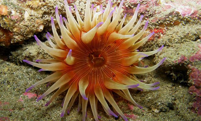 Het rijke waterleven en de schoonheid van onderwaterlandschappen zijn de twee belangrijkste redenen die u zouden moeten motiveren om duiken in Nieuw Zeeland te oefenen.