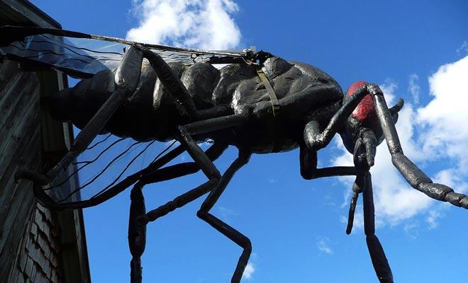 De zandvliegen zijn kleine gnats waarvan de steek een slecht teken achterlaat en een paar weken klagen. Alleen de regen die ervoor zorgt dat ze vliegen of afweermiddelen beschermen, beschermen u tegen deze demonische wezens.