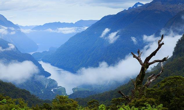 El árbol muerto de Wilmot Pass y la primera vista sobre el fiordo.