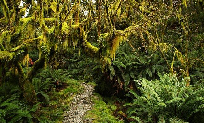 Het schuim beslaat het minst vierkante centimeter van het Fiordland.