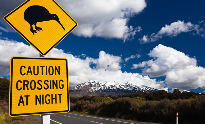 Además de las ovejas que a veces bloquean la carretera durante un cuarto de hora, también debe tener cuidado con los pingüinos y kiwis que cruzan sin previo aviso.