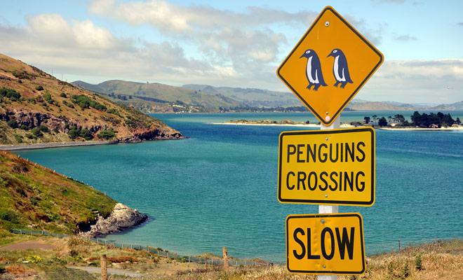 Algunas señales de tráfico pueden ser divertidas a primera vista, pero deben tomarse en serio incluso cuando anuncian un riesgo de cruzar pingüinos o kiwis.
