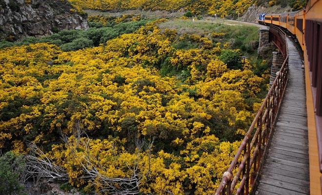 A menudo dejamos Dunedin con pesar, pero la excursión a Taieri Gorge Railway es un excelente remedio para la depresión.
