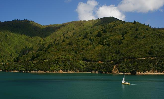 Naarmate Picton nadert, loopt de veerboot die tussen de twee eilanden loopt over een prachtige straat.