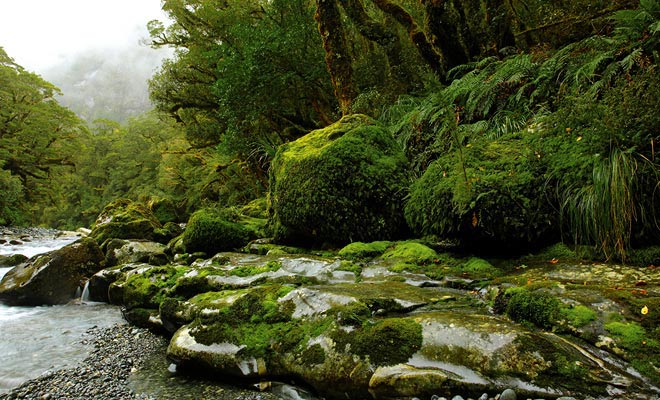 Muchas zonas de Fiordland son tan difíciles de alcanzar que nadie ha puesto los pies allí.