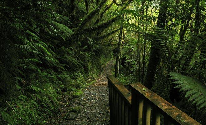 La West Coast es un área muy difícil de explorar debido a sus bosques prácticamente impenetrables. Incluso los maoríes no se aventuraron allí y la mayoría de los intentos de explotar los recursos de la región fracasaron.
