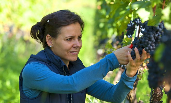 Veel plezier bij het plukken van fruit of druivenoogst blijken vrij vermoeiende activiteiten te zijn. Aches zijn normaal in de eerste paar dagen.