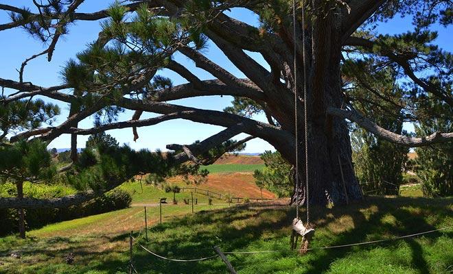 Op het halve punt van de rondleiding ontdekt u de grote feestelijke boom, waar vuurwerk in de Heer van de Ringen staat.